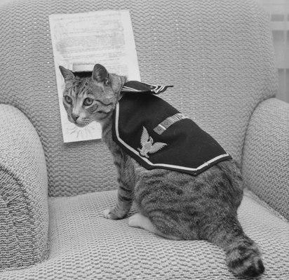 Pooli (cat)