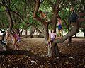 Portia Tree .jpg