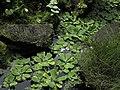 Praha, botanická zahrada, Fata Morgana - panoramio (11).jpg