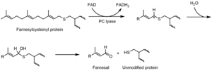 Hemithioacetal - Image: Prenylcysteine lyase mechanism