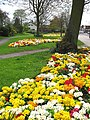 Primula's outside the park - geograph.org.uk - 159527.jpg