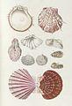 Prodromus in systema historicum testaceorum Tafel 11-cropped.jpg