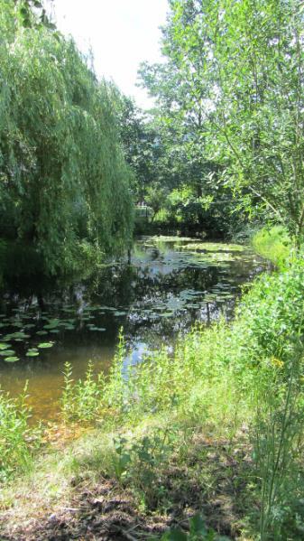 File:Protected park pond Altglienicke 1.djvu