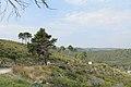 Puglia Coastline - panoramio (2).jpg