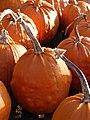 Pumpkin Parade - geograph.org.uk - 1072851.jpg