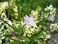 Purpleflower9.jpg