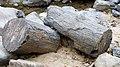 Puyango fossil tree 02.JPG