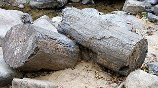 Puyango Petrified Forest
