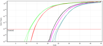 Real-time polymerase chain reaction - SYBR Green fluorescence chart produced in real-time PCR.