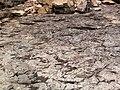 Quartz tholeiite basalt lava flow (flow A, Two Harbors Basalts, North Shore Volcanic Series, Mesoproterozoic, 1097-1098 Ma; Burlington Bay, Two Harbors, Minnesota, USA) 8 (22435677932).jpg
