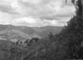 Queensland State Archives 425 Canungra Creek West Branch valley Lamington National Park Beaudesert Shire September 1933.png