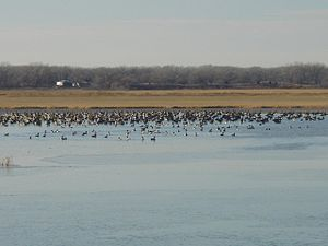 Quivira National Wildlife Refuge - Image: Quivirabirds