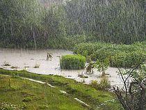 Rain on the field.jpg