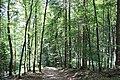 Ravin du Génie2.jpg