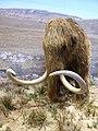 Reconstitution d'un mammouth 2.jpg