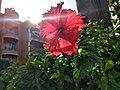 Red Tropical Flower 01.jpg