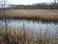 Reed beds in November - Waters' Edge Country Park - geograph.org.uk - 1603726.jpg