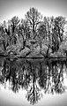 Reflection (30255989413).jpg