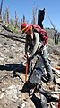Replanting a burned area on the Idaho Panhandle NF (39730798234).jpg