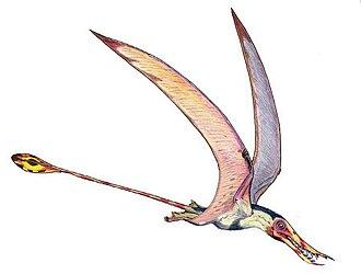 Rhamphorhynchus - Restoration