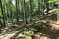 Ringwall Schlossberg (Burggaillenreuth) 01.JPG