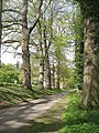 Road, Croft - geograph.org.uk - 1461564.jpg