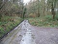 Road through Covert Wood - geograph.org.uk - 336000.jpg