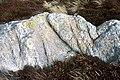 Rock and heather, Mynydd y Gadair. - geograph.org.uk - 1187994.jpg