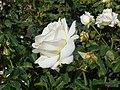 Rosa Chopin 2018-07-16 6274.jpg