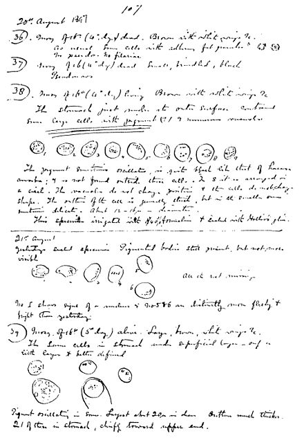 "The page in Ross' notebook where he recorded the ""pigmented bodies"" in mosquitoes that he later identified as malaria parasites Ross, 20.Aug.1897.jpg"