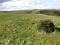 Rough grazing field - geograph.org.uk - 753188.jpg