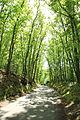 Route du Tilleul à Raizeux le 17 mai 2015 - 10.jpg