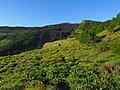 Rowena Crest at Columbia River Gorge in Oregon 1.jpg