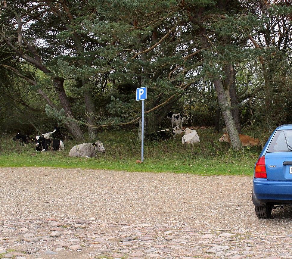 Rural parking lot at Kovik, Gotland