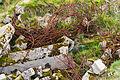 Rusted rebars german bunkers Pointe du Hoc.jpg