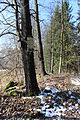 Rybník Koželuh - okres Písek (012).jpg