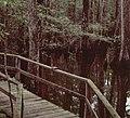 SC Francis Beidler Forest.JPG