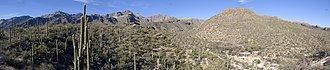 Sabino Canyon - Image: Sabino Canyon 20090214
