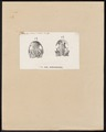 Salamandra subcristata - schedel - 1700-1880 - Print - Iconographia Zoologica - Special Collections University of Amsterdam - UBA01 IZ11400115.tif
