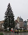 Sapin, place Kléber (Strasbourg) (1).jpg