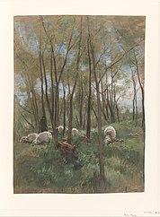 Troupeau de moutons dans une forêt
