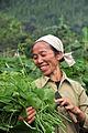 Sechium edule in Vietnam - chayote contd 4lo.jpg