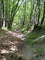 Sentiero per Bocconi - panoramio (1).jpg