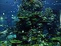 Sentosa Island Aquarium.jpg