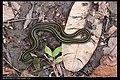 Serpentes (6084945791).jpg