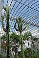 Serre des milieux arides-Jardin des plantes de Nantes (8).jpg