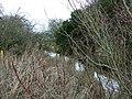 Share Ditch, Lushill, Swindon - geograph.org.uk - 302482.jpg