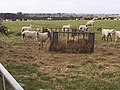 Sheep Feeder - geograph.org.uk - 32213.jpg