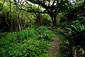 Side trail along Kamananui stream (5217013992).jpg