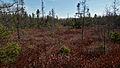 Sifton Bog - London, Ontario 03.jpg